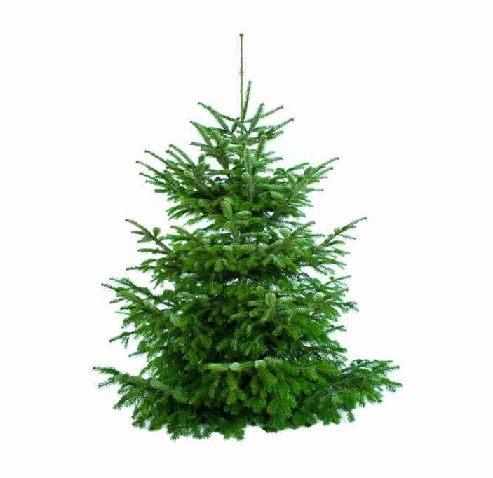 schm ckt den weihnachtsbaum ihr kreativen diabetiker staeffs er leben mit diabetes. Black Bedroom Furniture Sets. Home Design Ideas