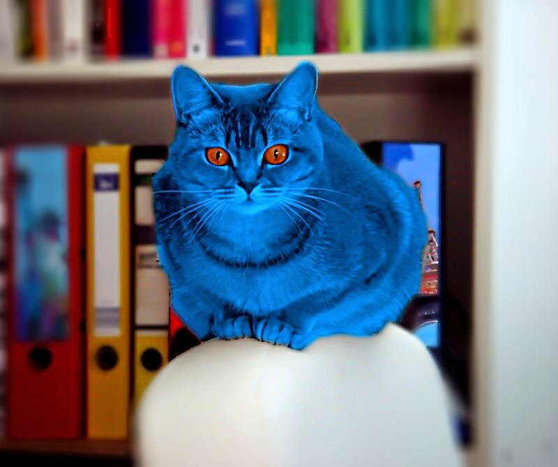 Auch Miaule erstrahlt blau am Welt-Diabetes-Tag