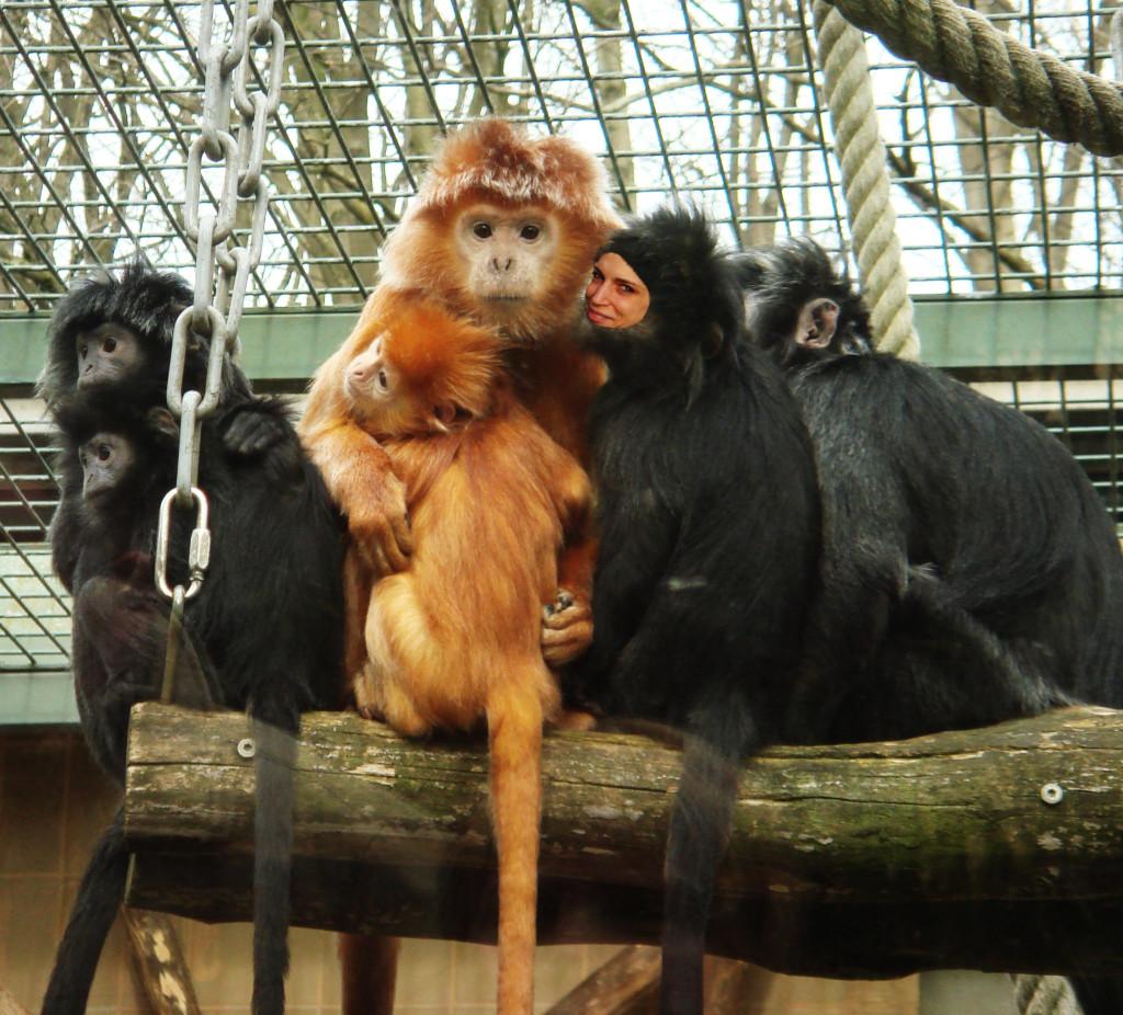 Schluss mit dem Affentheater: Gemeinsam sind wir stark