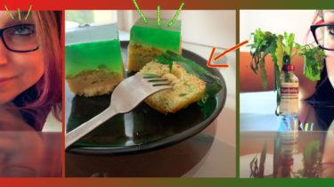 zuckerfrei Wackelpudding Kuchen